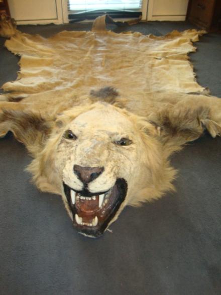 lion 012