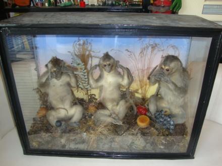 monkeys 005